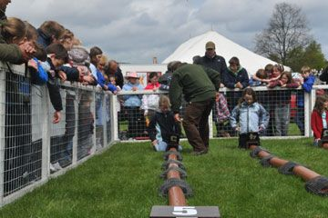 Ferret racing at Chatsworth - the start